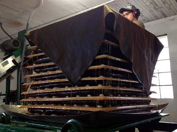 Pressing apples in a Rack and Cloth press
