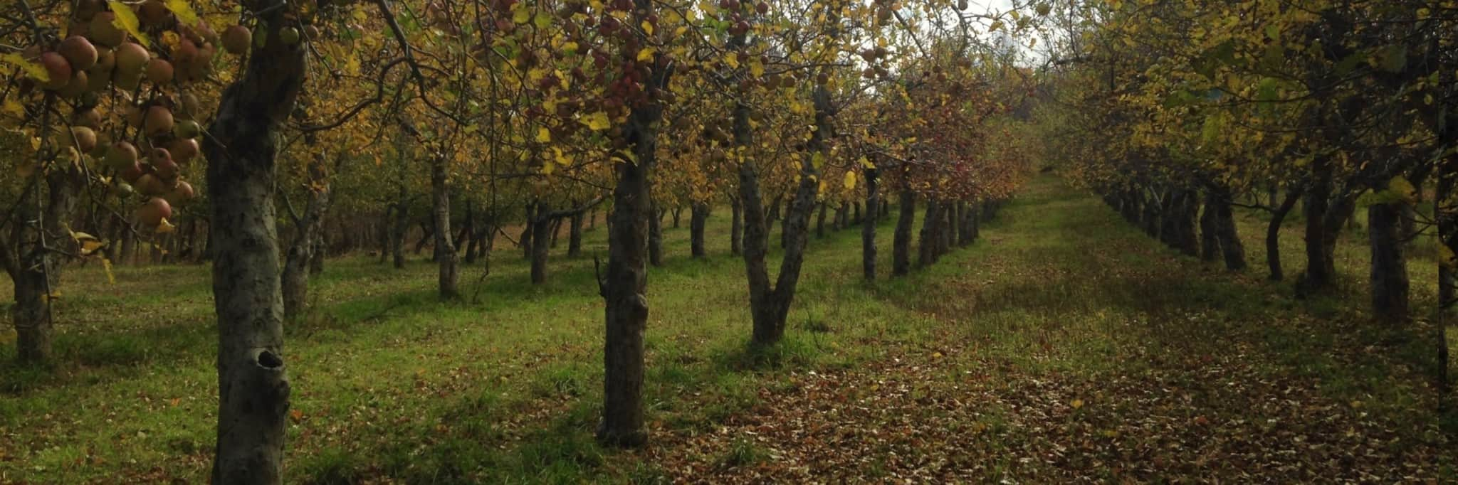 Orchard at Eve's Cidery