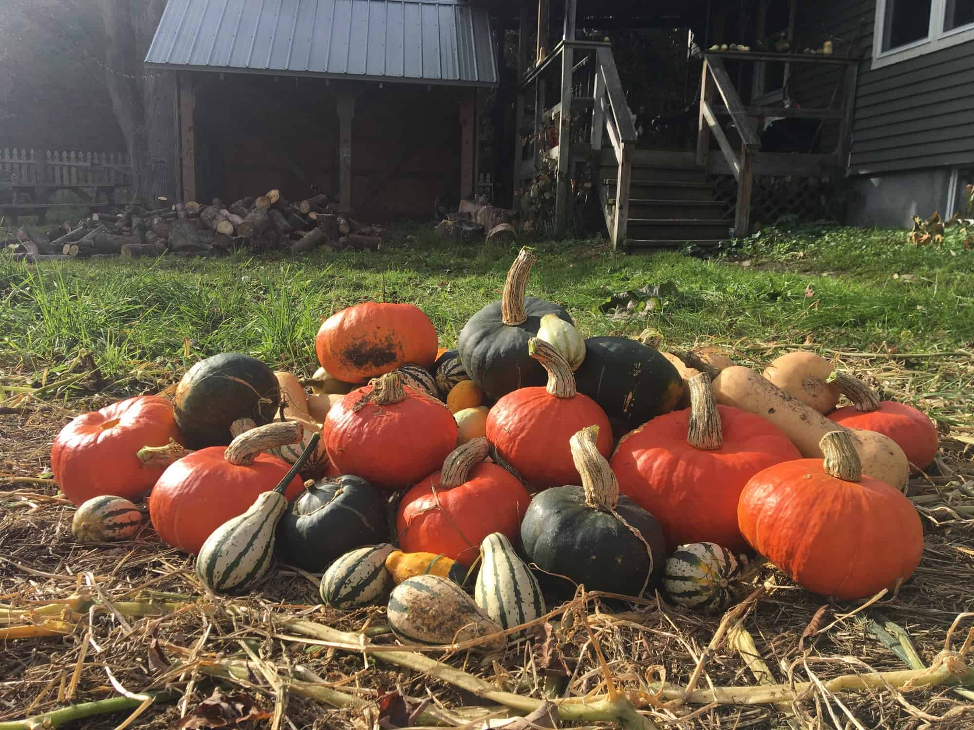 Homestead Harvest at Eve's Cidery